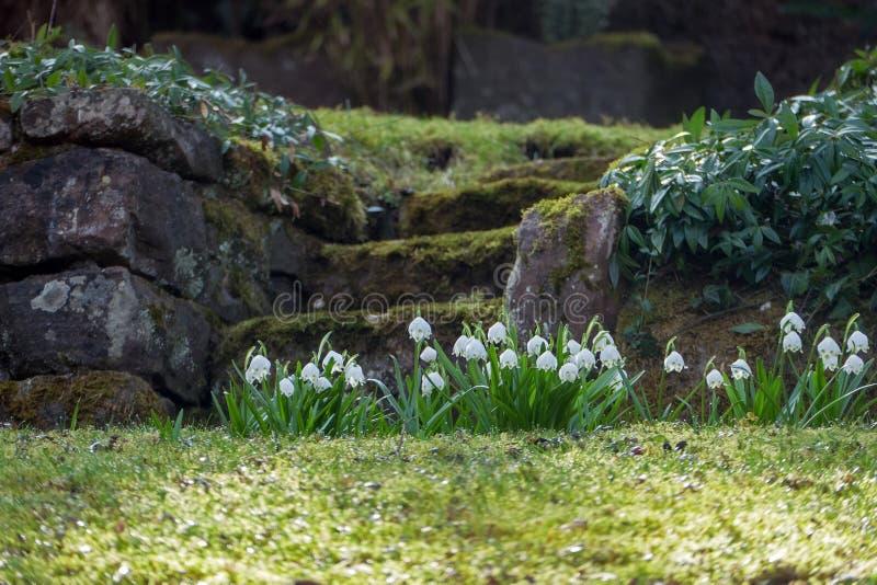 Naturalni kamienni schodki w zboczu uprawiają ogródek z wiosna płatkiem śniegu obrazy royalty free