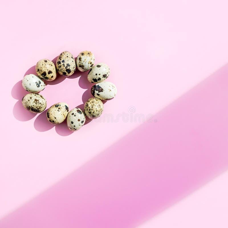 Naturalni przepiórek jajka w owalnym kształcie na różowym tle Flatlay, odgórny widok, minimalny kopii przestrzeni kwadrat zdjęcie royalty free