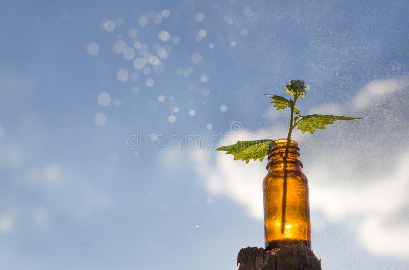 Naturalni remedia - medycyny zdjęcie stock