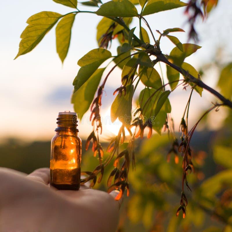 Naturalni remedia - olej, ziołowy zdjęcie stock