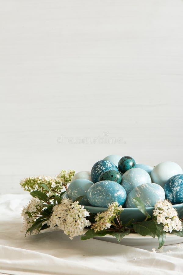Naturalnie farbujący Wielkanocni błękitni jajka, otaczający białymi kwiatami zdjęcia royalty free