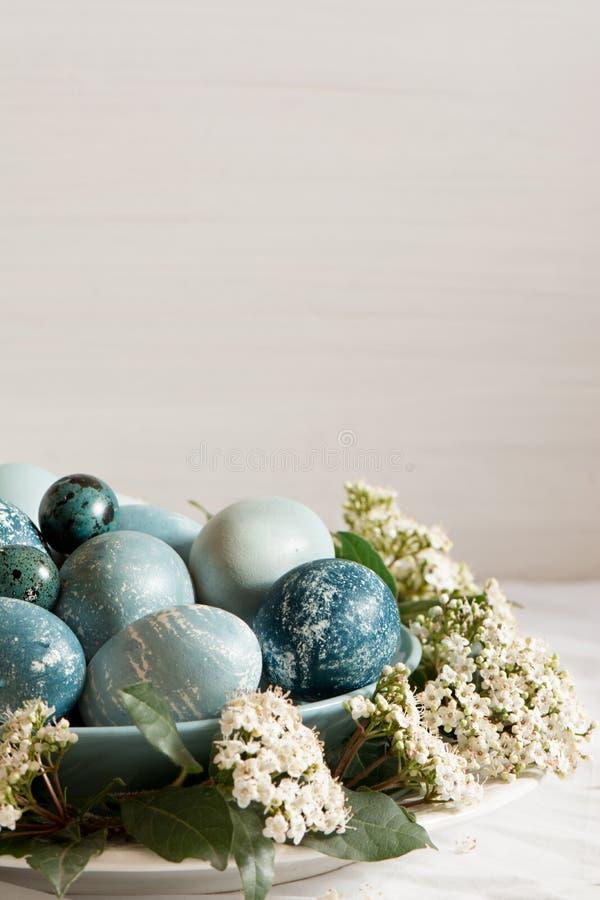 Naturalnie farbujący Wielkanocni błękitni jajka, otaczający białymi kwiatami fotografia stock