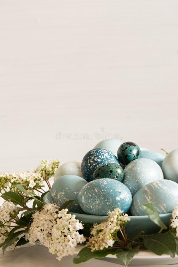 Naturalnie farbujący Wielkanocni błękitni jajka, otaczający białymi kwiatami obrazy stock