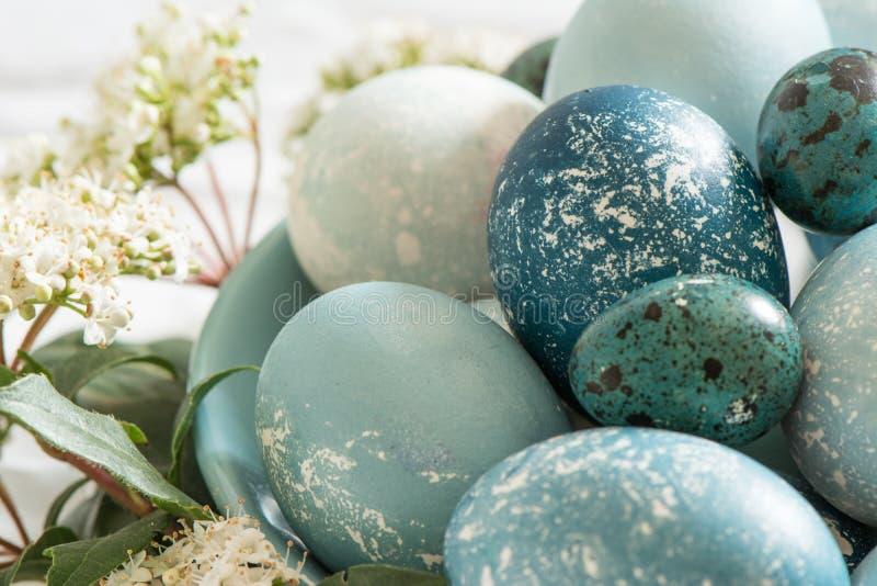Naturalnie farbujący Wielkanocni błękitni jajka, otaczający białymi kwiatami zdjęcie stock