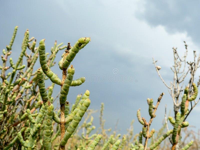 Naturalny środowisko Nabrzeżni bagna roślinność zdjęcie stock