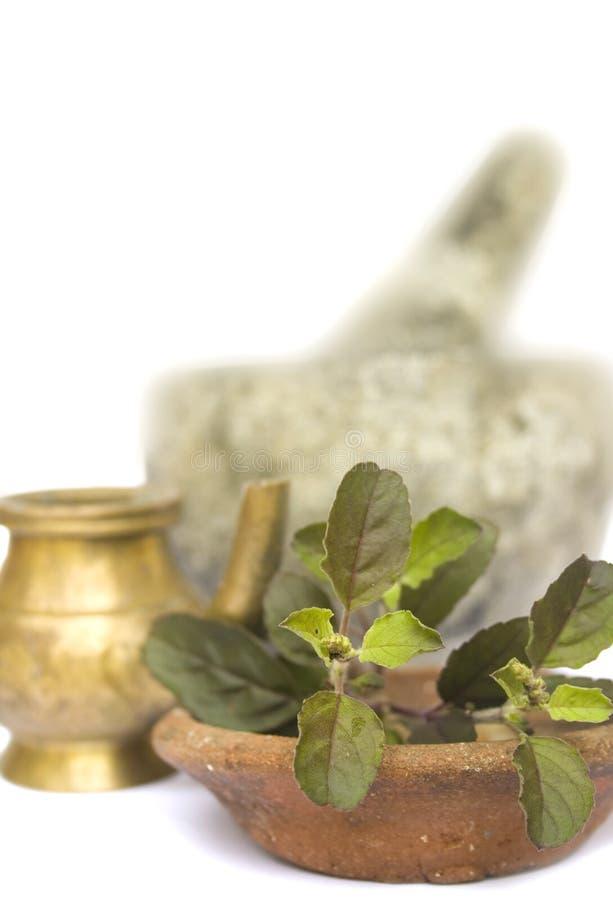 naturalny ayurveda (1) zdrowie zdjęcie royalty free