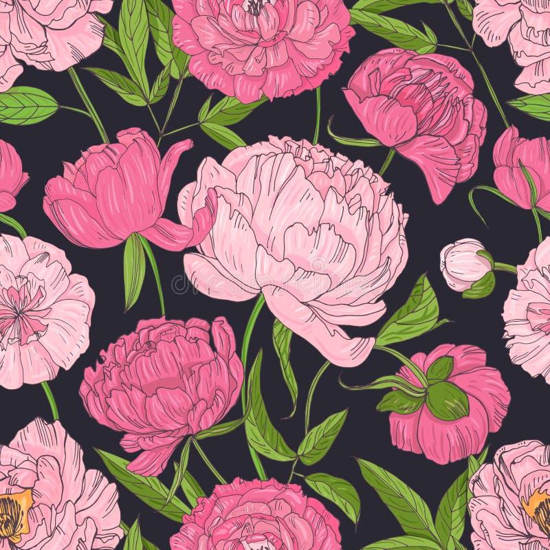 Naturalny bezszwowy wzór z kwitnienie menchii peoniami na czarnym tle Tło z kwitnąć ogrodowych kwiaty royalty ilustracja