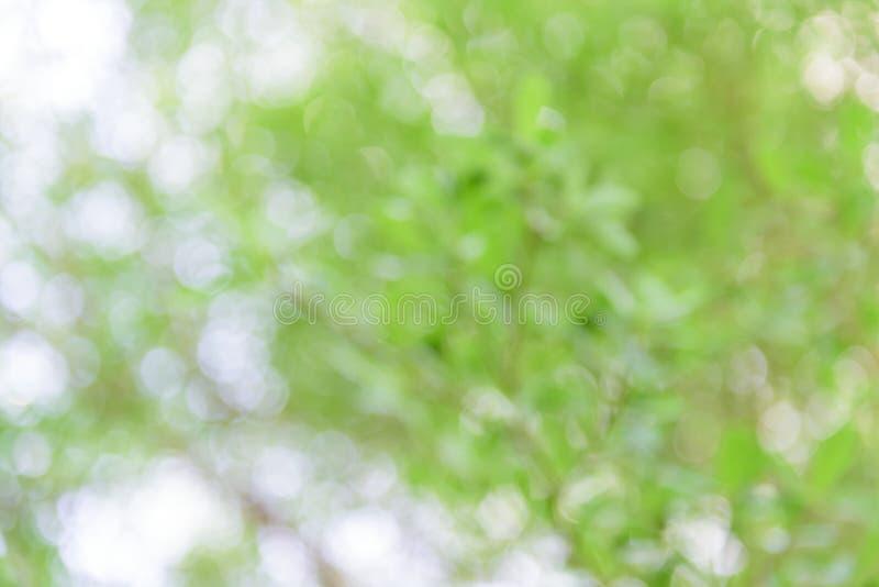Naturalny Bokeh, zamazany bokeh obrazy royalty free