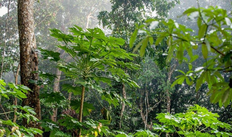Naturalny dżungli tło Tropikalny las tropikalny w ranek mgle fotografia royalty free