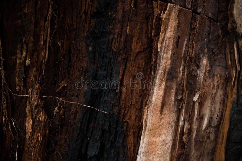 Naturalny drewniany tło cisawy drzewo palił błyskawicą obrazy stock
