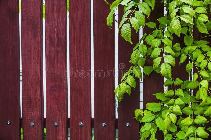 Naturalny drewniany tło z zielonymi liśćmi obrazy royalty free