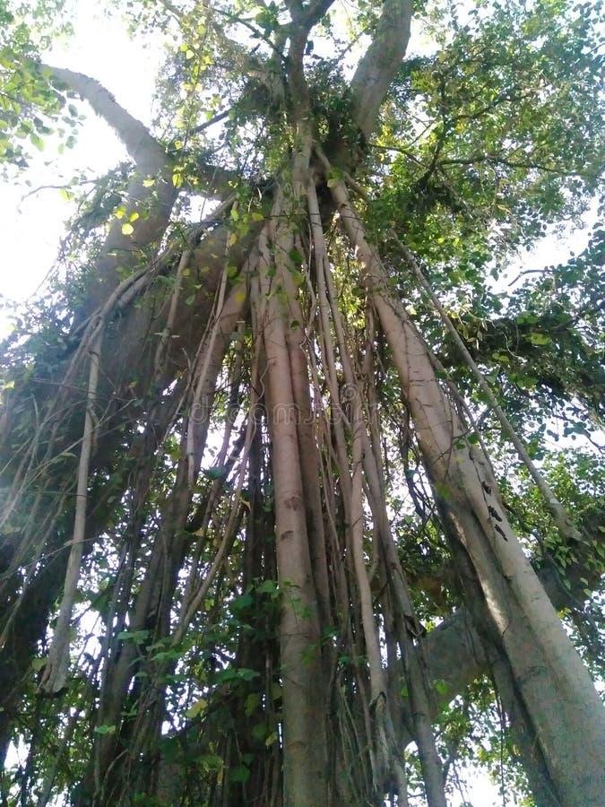 Naturalny drzewny las fotografia stock