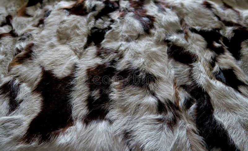 Naturalny futerkowy szary biel z czarnymi lampasami, piękny tło obrazy stock