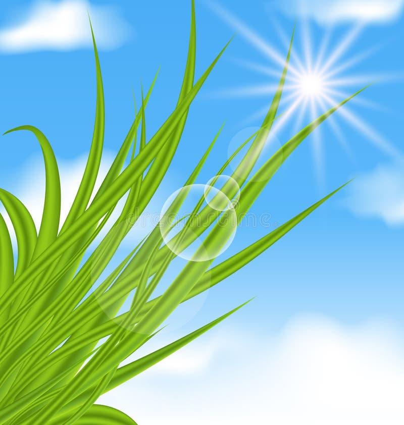 Naturalny iluminujący tło z zieloną trawą ilustracja wektor