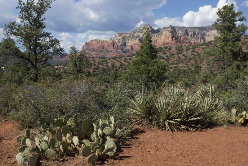 Naturalny kaktusa ogród w Sedona Arizona zdjęcie stock