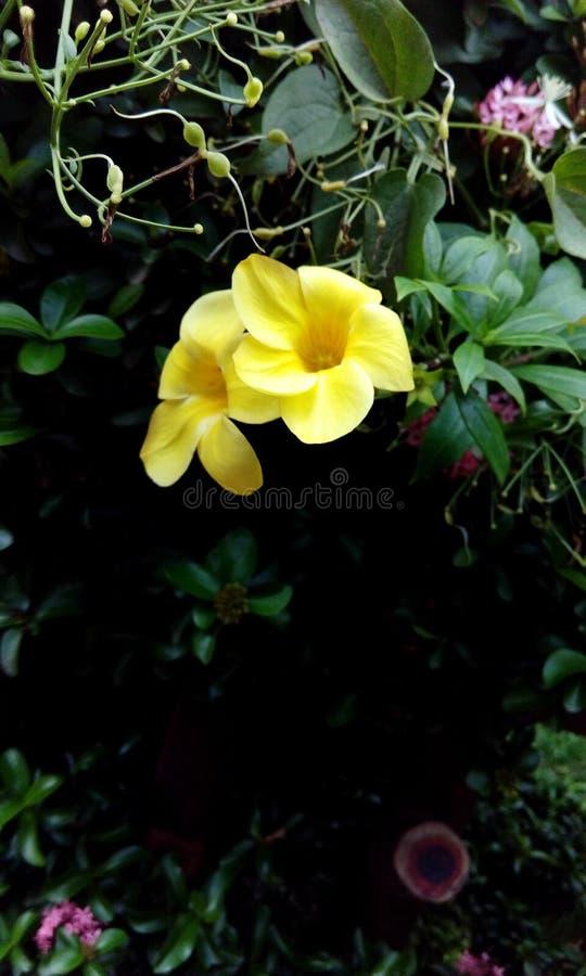 Naturalny kwiat obraz royalty free