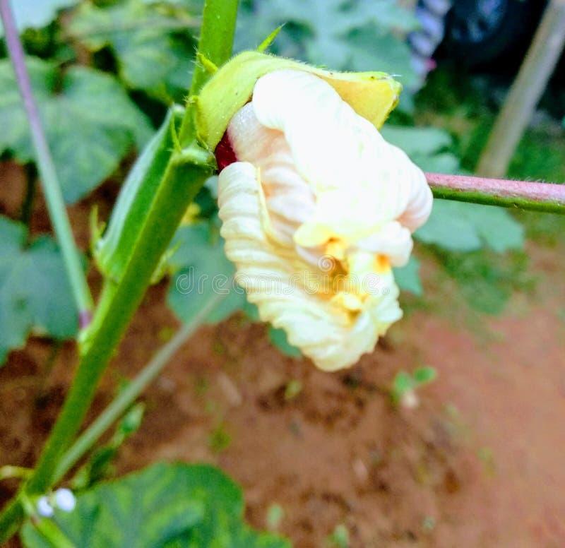 Naturalny kwiatu widok w deszczowego dnia ki obrazy royalty free