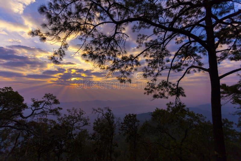 Naturalny las Świerkowi drzewa iluminujący Sunbeams zdjęcie royalty free
