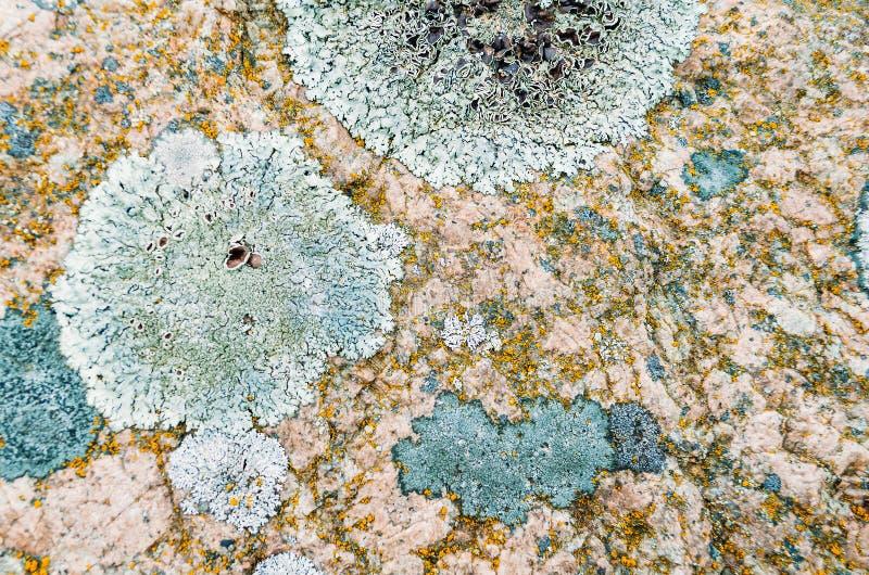 Naturalny liszaj round forma na kamieniach zdjęcia stock