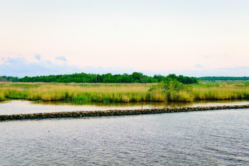 Naturalny Luizjana zalewisko fotografia royalty free