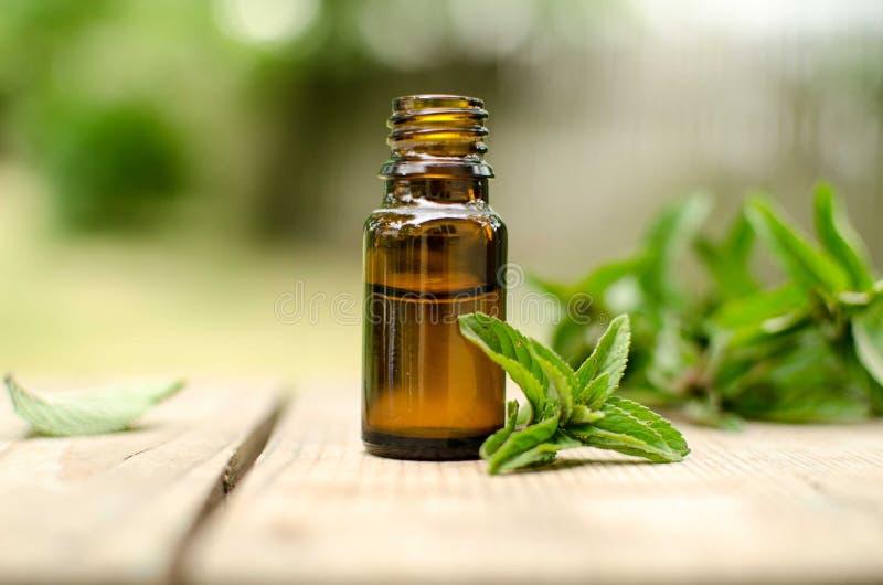 Naturalny Nowy Istotny olej w Szklanej butelce z Świeżymi Nowymi liśćmi obrazy royalty free