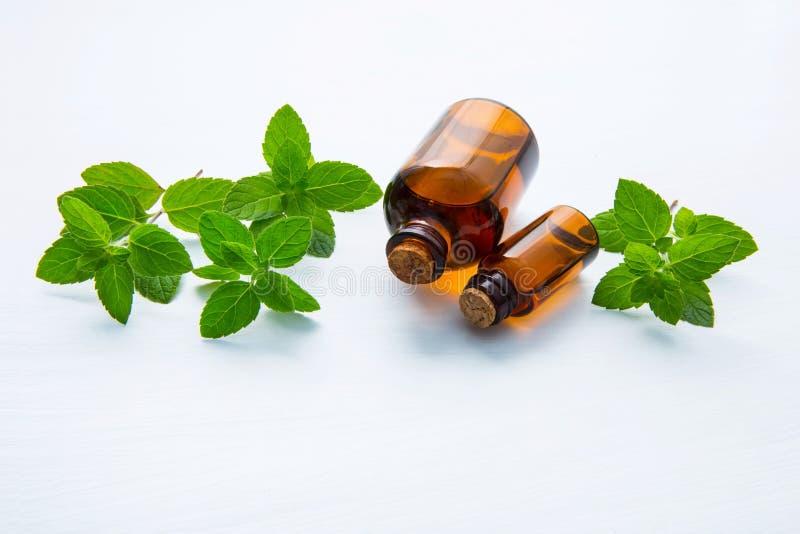Naturalny Nowy Istotny olej w Szklanej butelce z Świeżymi Nowymi liśćmi na białym tle zdjęcie stock