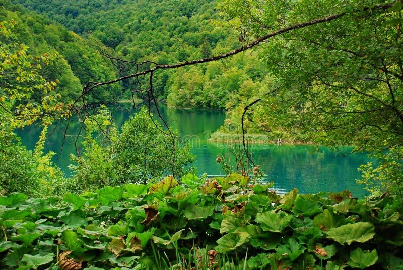 Naturalny park Plitvice zdjęcia royalty free