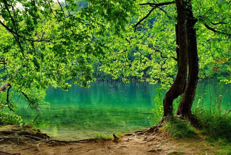 Naturalny park Plitvice 2 obraz royalty free