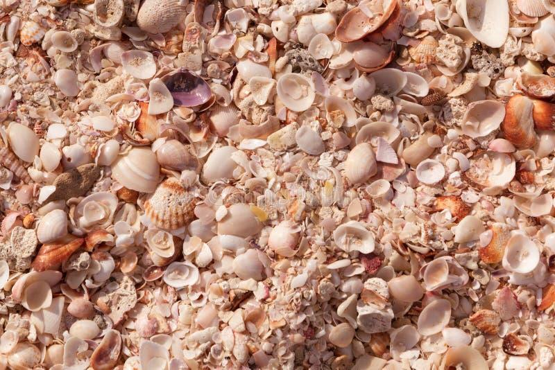 Naturalny piaska i skorup tło Czarna denna skorupa na brzegowych Seashells inkasowych z bliska stonowany zdjęcia royalty free