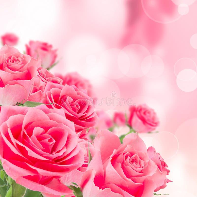 Naturalny różowy róży tło obraz royalty free