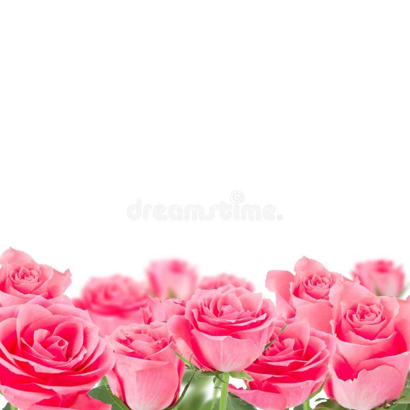 Naturalny różowy róży tło fotografia stock