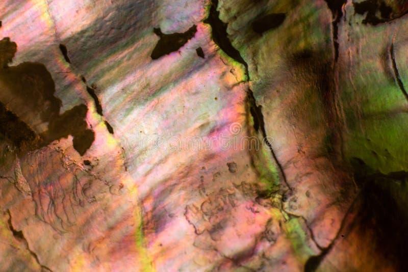 Naturalny skorupy haliotis perła iryzuje teksturę obrazy stock