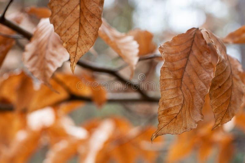 Naturalny tło Bokeh jesieni liście fotografia royalty free