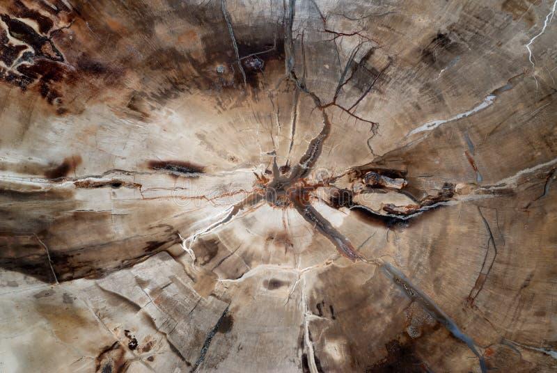 Naturalny tło, fossilized drewno obrazy royalty free