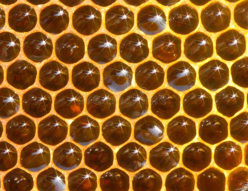 Naturalny tło honeycomb z miodem i widmami obrazy royalty free
