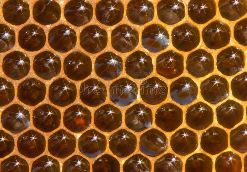 Naturalny tło honeycomb z miodem i widmami zdjęcia royalty free