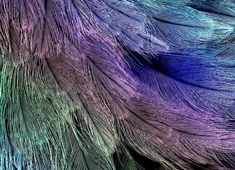 Naturalny tło jaskrawi piórka ptaki różnorodny zdjęcia royalty free