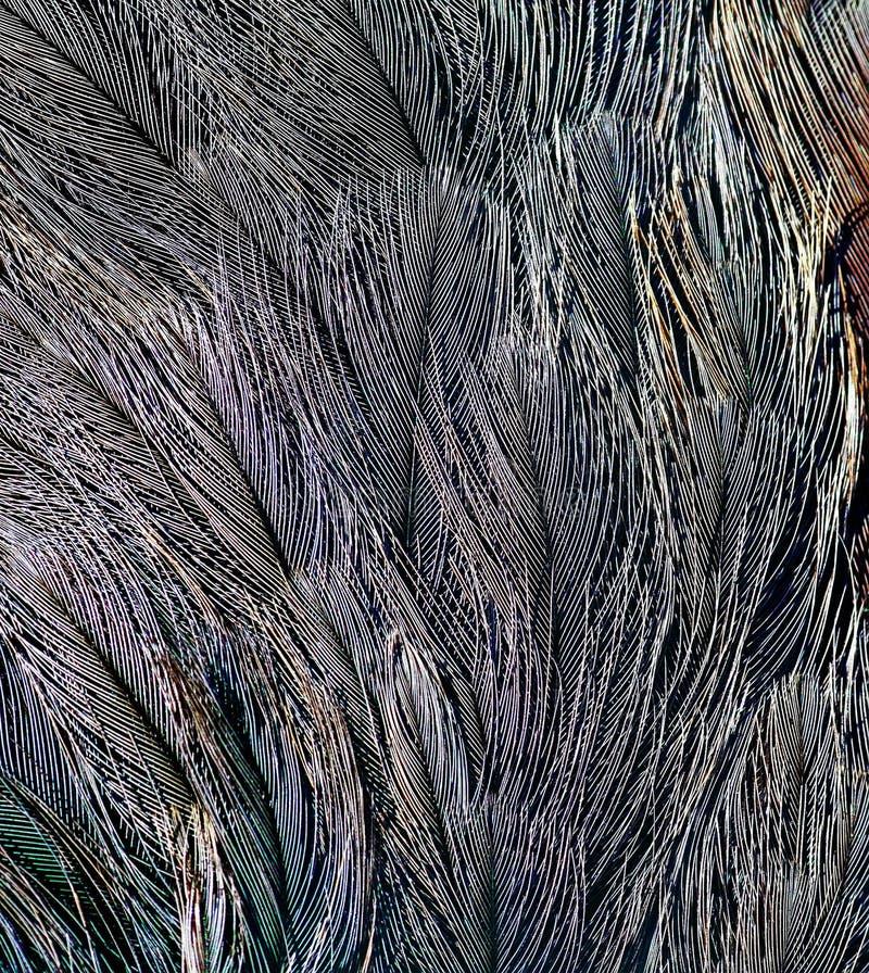 Naturalny tło jaskrawi piórka ptaki różnorodny col obraz stock