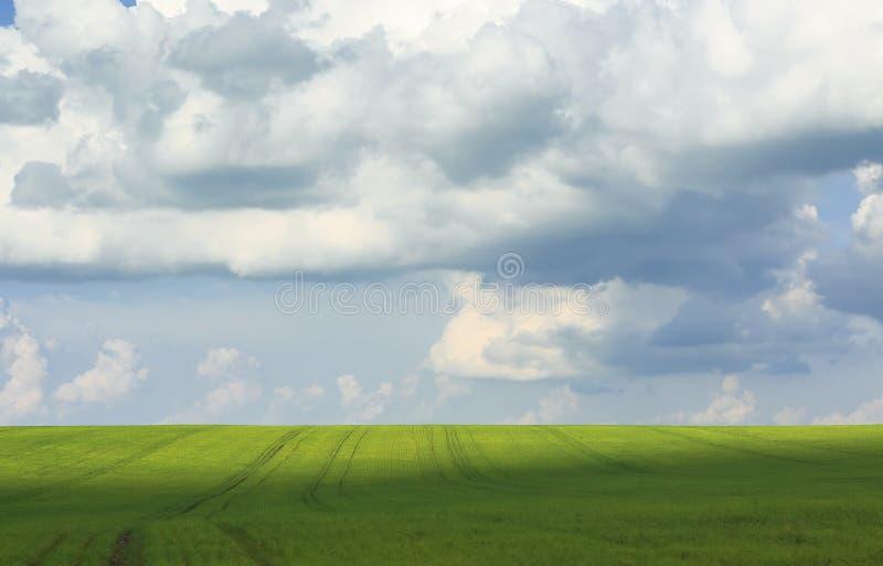naturalny tło niebieskiego nieba i zieleni pola zakrywający z trawą zdjęcie stock