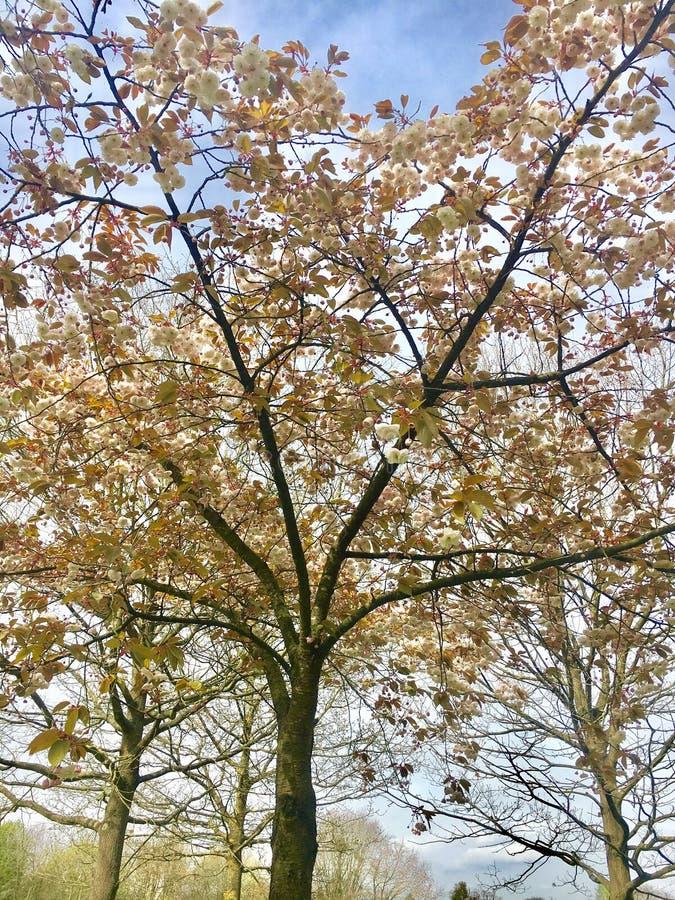 Naturalny w parku obrazy royalty free
