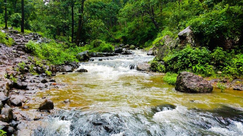 Naturalny widok narmada rzeka płynie przez Dzikiego obrazy royalty free