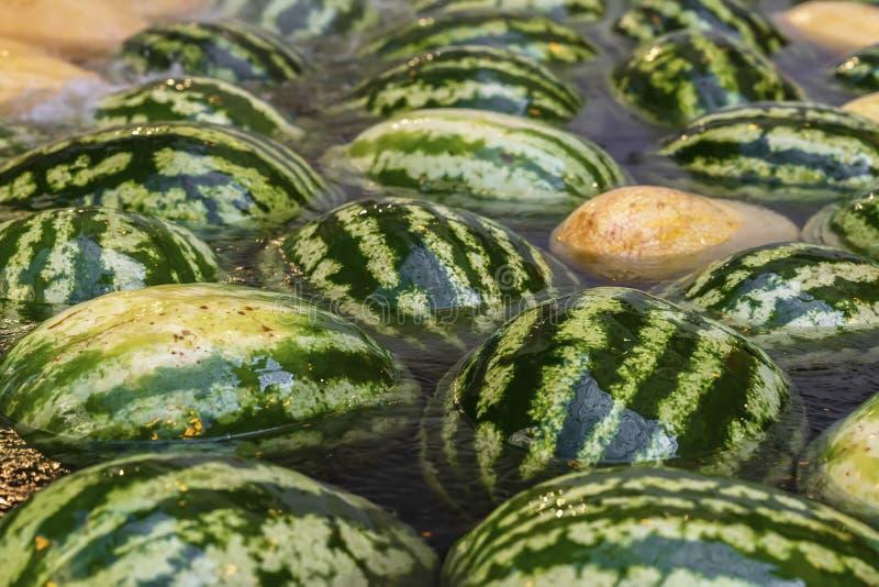 Naturalny wielki cały świeży arbuza zakończenie unosi się i chłodzi w wodzie zdjęcie royalty free