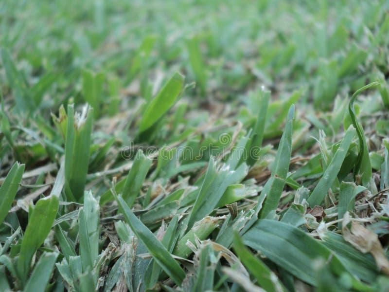 Naturalny zielonej trawy tło zdjęcie royalty free