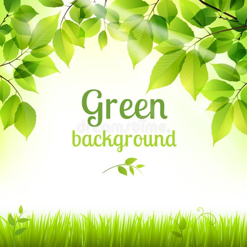 Naturalny zielony świeży ulistnienia tło royalty ilustracja
