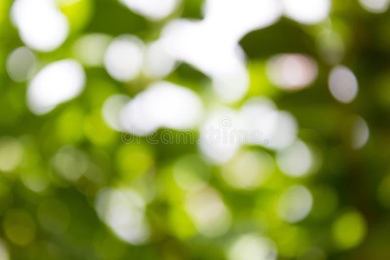 Naturalny zielony Bokeh tło, Abstrakcjonistyczni tła zdjęcie royalty free