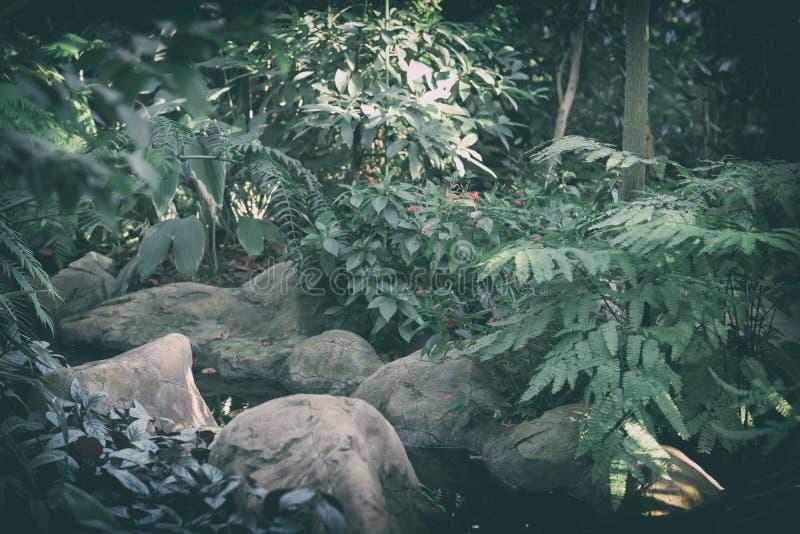 Naturalny zielony tropikalny krajobraz, egzotyczny tło, dżungli tekstura zdjęcie royalty free