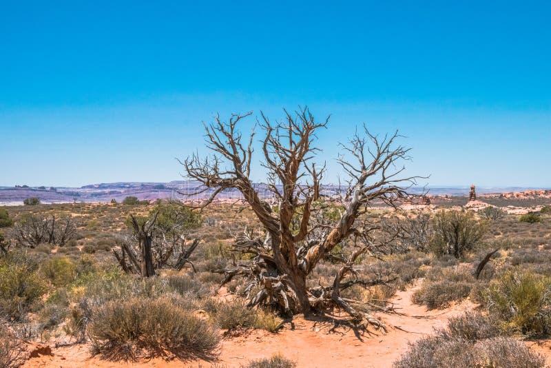 Naturalny naturalny zjawisko Pustynny krajobrazowy Moab, Utah, usa zdjęcia stock
