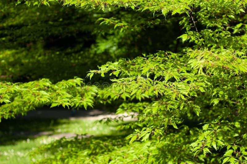 Naturansicht des grünen Blattes auf Grünhintergrund im Park, der als natürliche Grünpflanzen des Hintergrundes verwendet, gestalt lizenzfreie stockbilder