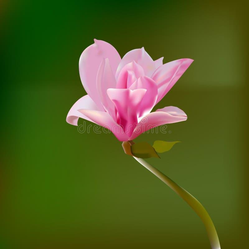 Naturbakgrund med filialen av rosa färgblomman vektor vektor illustrationer