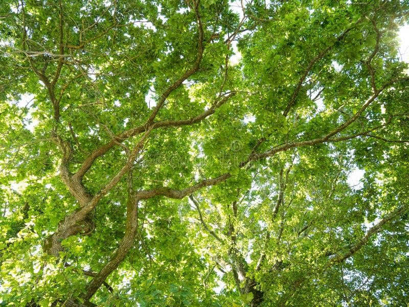 Naturbakgrund med gröna skogträd arkivfoton